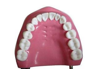 Image 3 - באיכות גבוהה 6 פעמים גדול שיניים דגם שיניים דגם מיוחד קישוט רופא שיניים מרפאת אישית דקורטיבי צלמיות