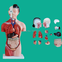 HOT 42CM Female Torso With Internal Organs 15 Parts Human Torso Model