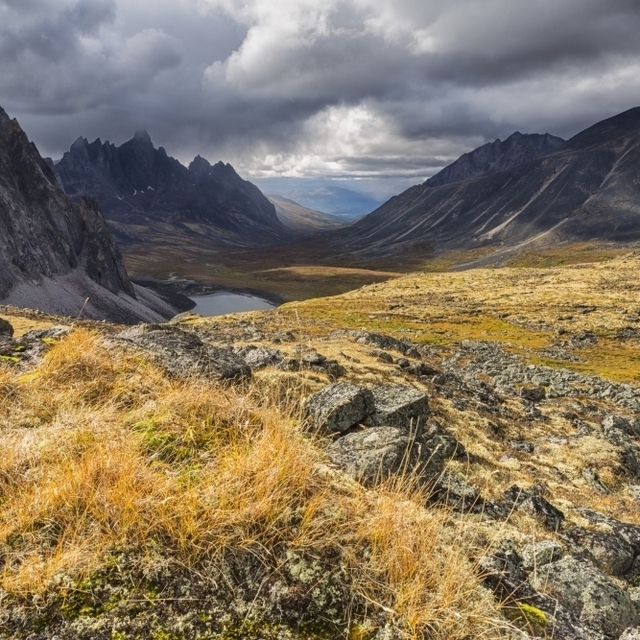 Colorful tundra in autumn in Tombstone Territorial Park; Yukon  Canada Poster Print (19 x 12)