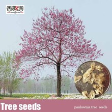Фотография Free shipping 200pcs fast growing tree Seeds Paulownia, empress tree Romantic Flower