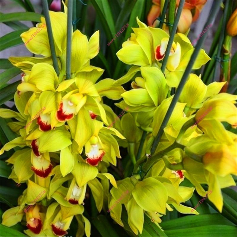 горшки для орхидей цена