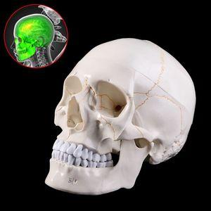 Image 4 - חיים גודל אדם גולגולת דגם האנטומיה אנטומיים רפואי הוראת שלד ראש לומד אספקת הוראה
