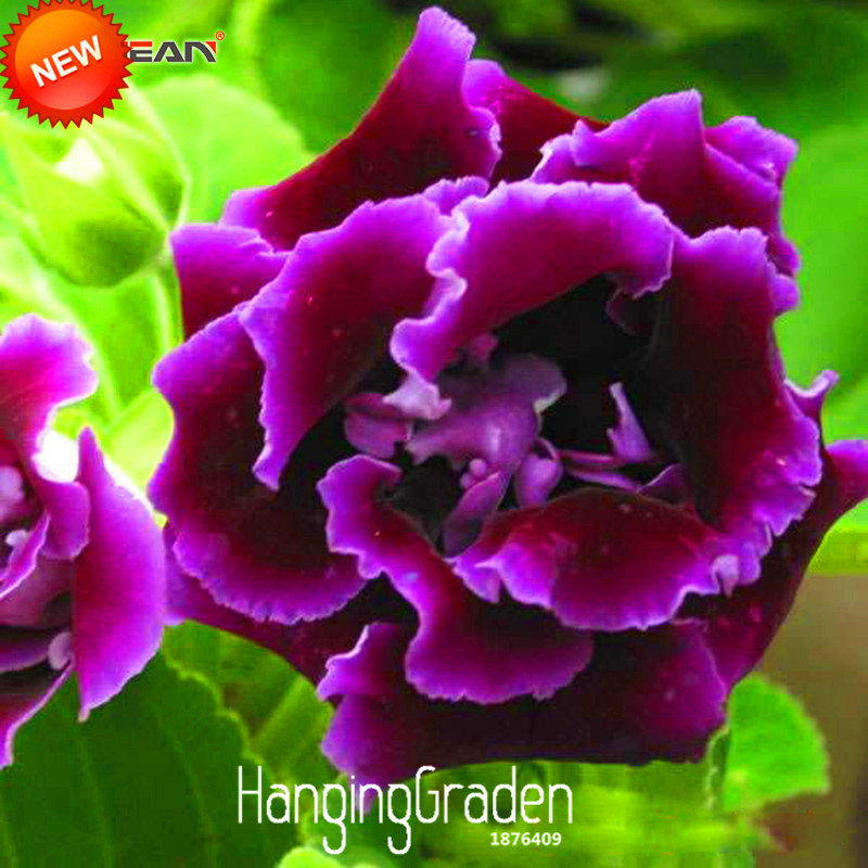Broche Email Fleur Multicolore Vert Violet Rouge Jaune Papillon Original XZ 1