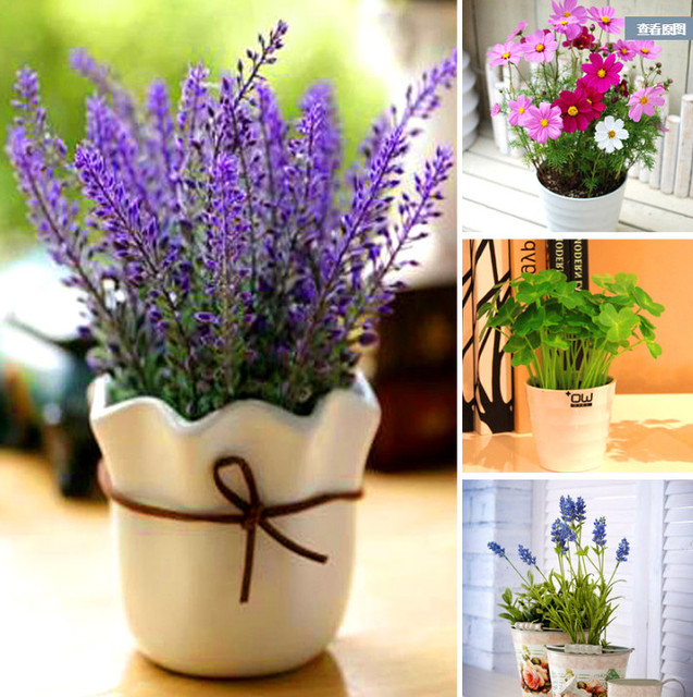 Lavender Flower Seeds (500 pieces)