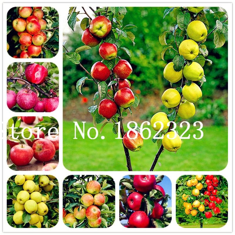 30 шт./пакет Райское яблоко карликовые деревья, миниатюрный яблоня, сладкий органический фрукты овощи карликовые деревья, Крытый или открыты...