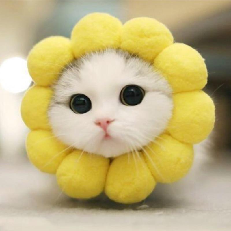 Download 63+  Gambar Kucing Yang Lucu Terlihat Keren