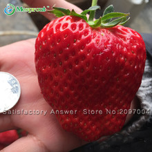 Loss Promotion! 50PCS Giant Strawberry Fruit Seeds Garden And Garden Balcony Potted Strawberry Seeds(China)