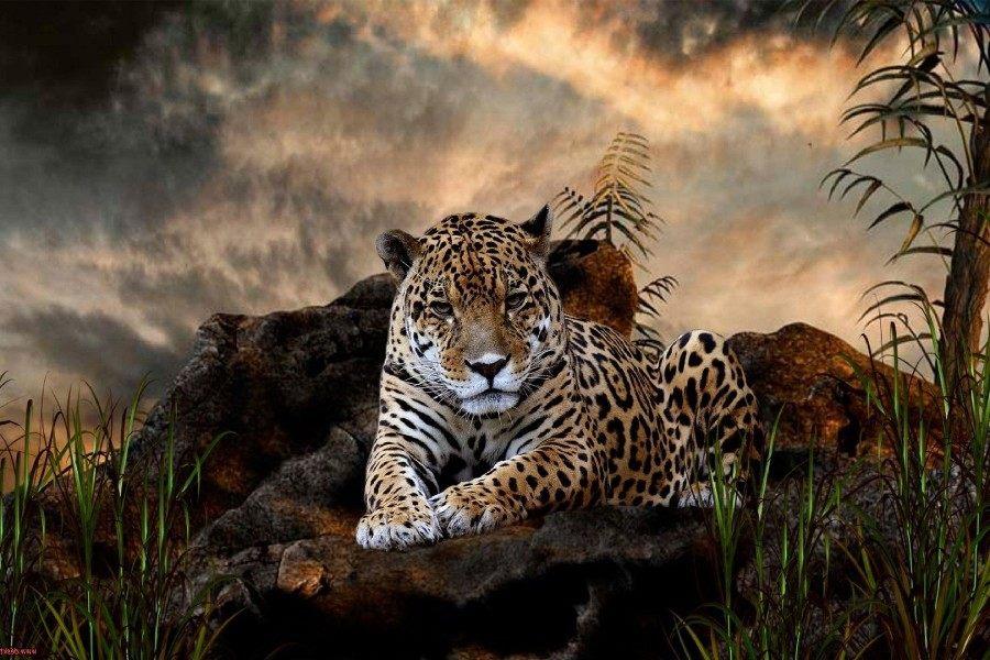 Online-Shop DIY rahmen Leopard Cheetah Blauen Augen Wilden Tier ...