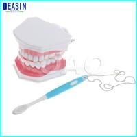 Teeth model teeth removable Oral health care dental model nursery children's toys brushing teeth dental structure Demo