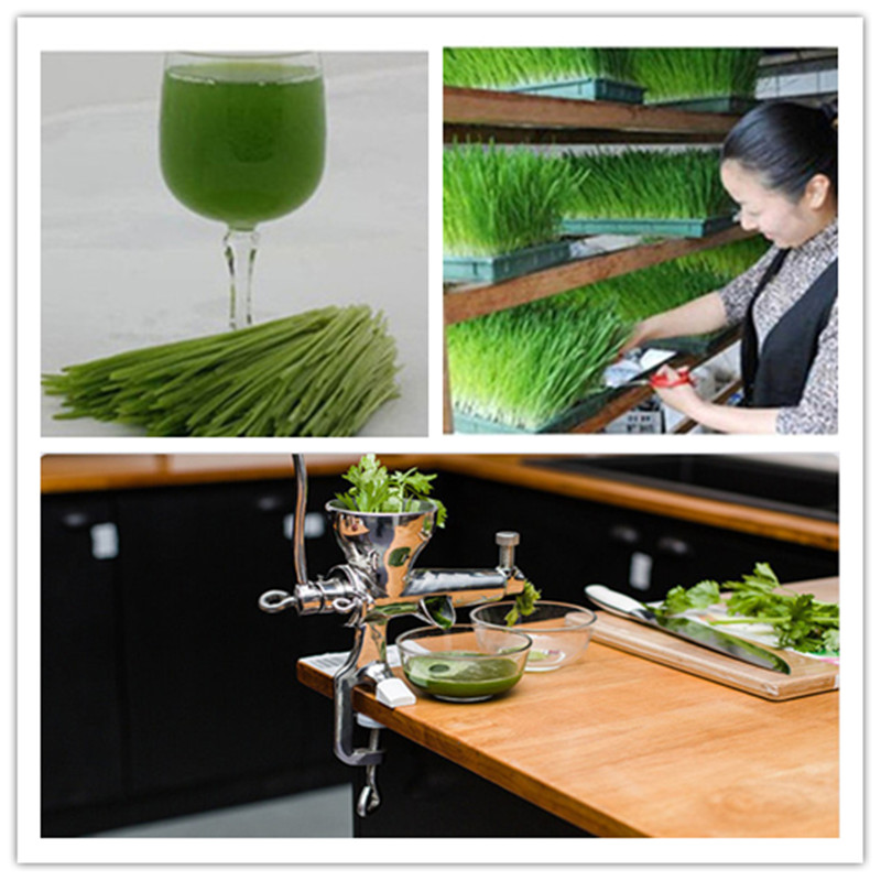 2016 New type wheat grass juicer high quality fruit juice extractor mini wheatgrass manual juicing machine ZF glantop 2l smoothie blender fruit juice mixer juicer high performance pro commercial glthsg2029