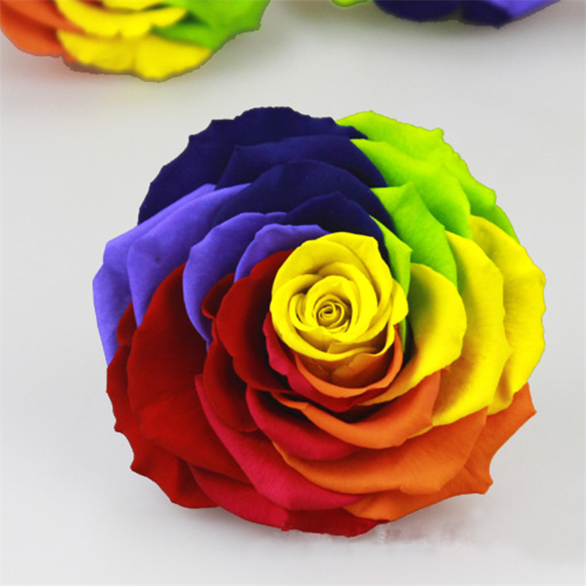 Giant Rainbow Color Rose Preserved fresh Flower 9 10 rose Material     Giant Rainbow Color Rose Preserved fresh Flower 9 10 rose Material  Valentine Day Color DIY Preservation Flower in Artificial   Dried Flowers  from Home