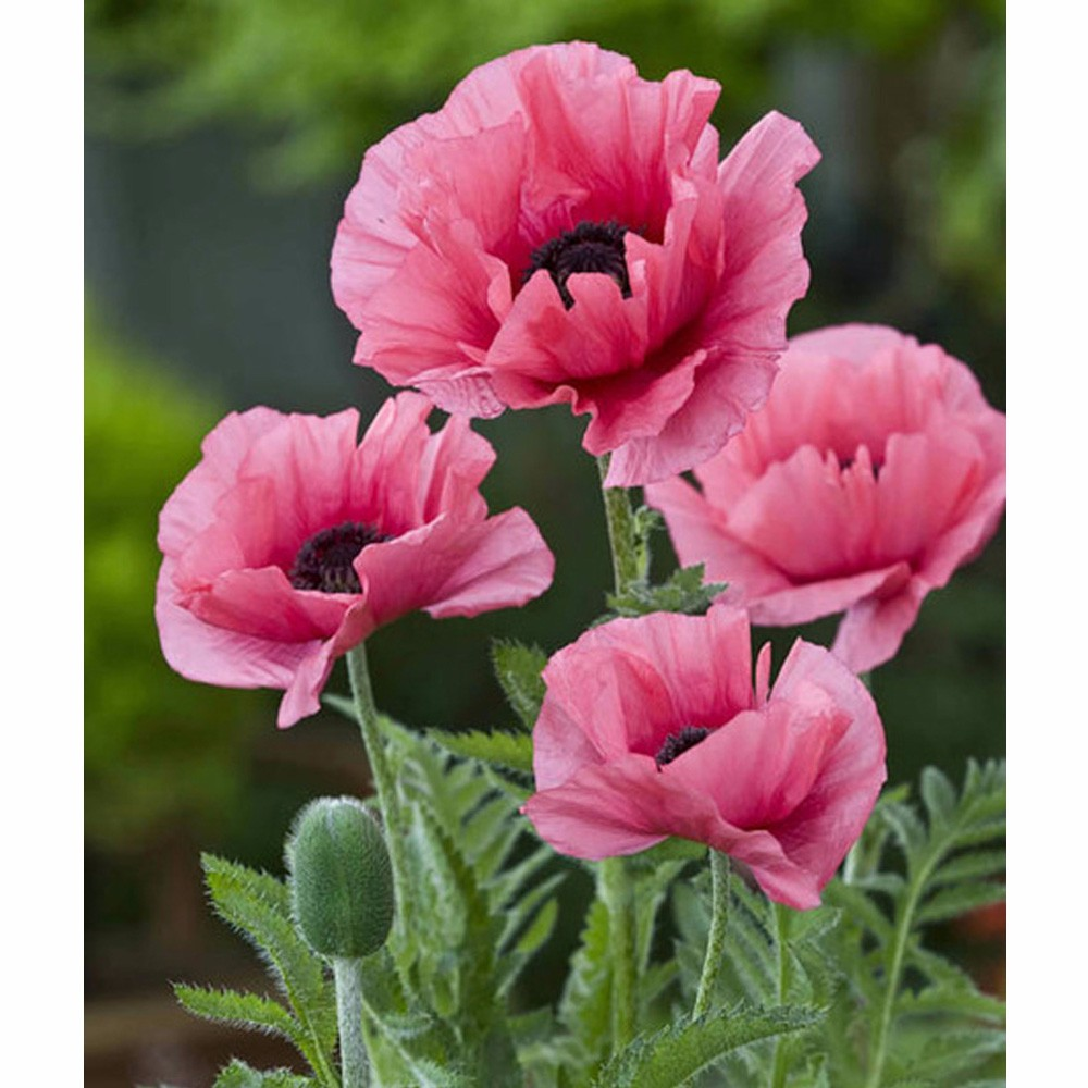 Diamond Paintings Pink Poppy Flowers Embroidery Rhinestone Pasted 5d