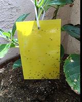 10 упаковок двухсторонние Желтые Липкие Ловушки для борьбы с вредителями клопы липкая доска для летающих растений насекомых 9X7 дюймов