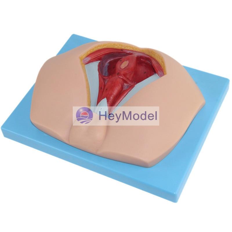 HeyModel Male Perineum Anatomy life size anatomy and biology education female perineum male perineum anatomy model anatomy perineum model gasen rzmn019
