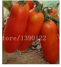 200 /bag tomato seeds cherry tomato seeds vegetable and fruit seeds  Resistant to diseases ornamental-plant fruit-tree-seedlings