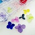36 шт Природный малый лист Гортензия Сухих цветов с пластиковой коробке упаковки стеклянный шар наполнителя подвески