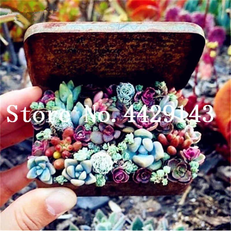 100 шт Мини бонсай из суккулентов тетрагония синий камень цветок растения литопс псевдотрункателла бонсай для дома сад Бесплатная доставка