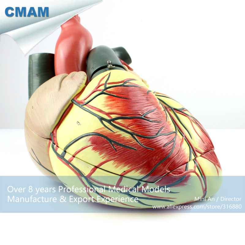 12485 CMAM HEART09 Oversized Human Heart Anatomical Model, 3 Parts ...