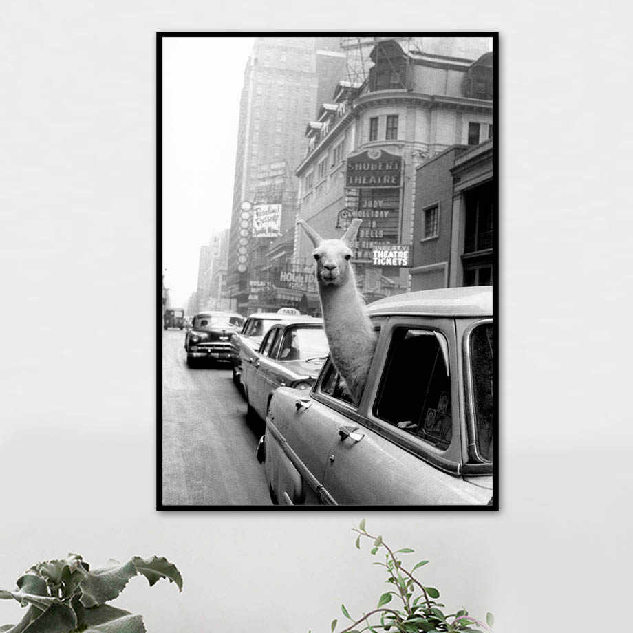 Llama in a taxi Wall Art Canvas Painting Nordic Black White Posters And Prints Animal Wall Pictures For Living Room Home Decor