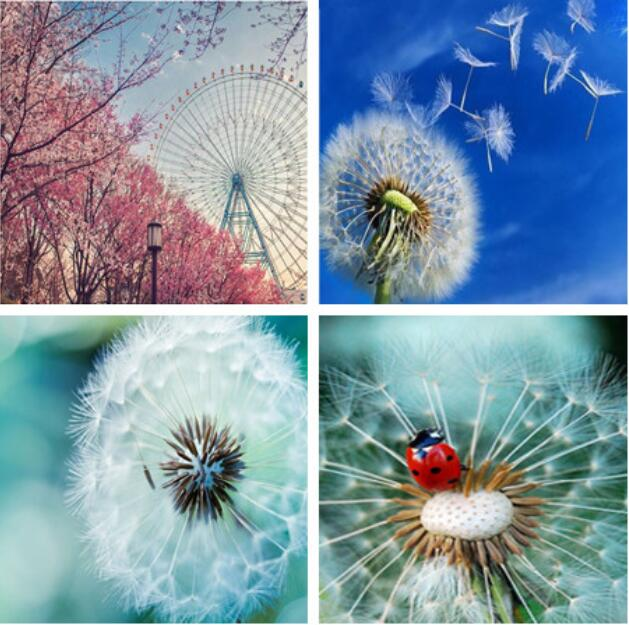 Hot Sale 5D Full circular Diamond Painting cute Dandelion flower picture of rhinestone Embroidery in Diamond Painting Cross Stitch from Home Garden