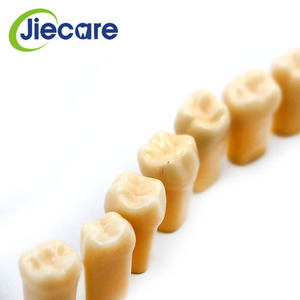 Image 5 - 28 PCS / Bag High Quality Resin Simulation Tooth Grain Dental Model For Dentist Exam Preparation Teaching Free Shipping