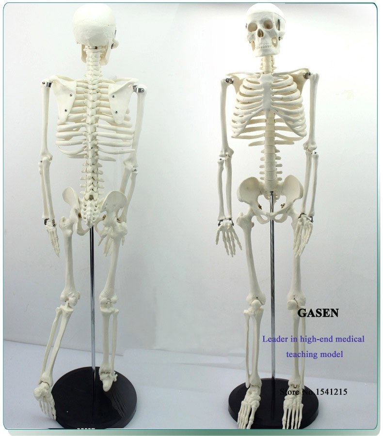 MADICAL HUMAN SKELETON MODEL TEACHING EDUCATIONAL MODEL HIGH QUALITY ANATOMY MODEL 85CM HAND ASSEMBLED PVC MATERIAL