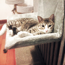 Кошка Люлька-Гамак Подушка-радиатор с регулируемым держателем и съемным уютным покрытием из овчины