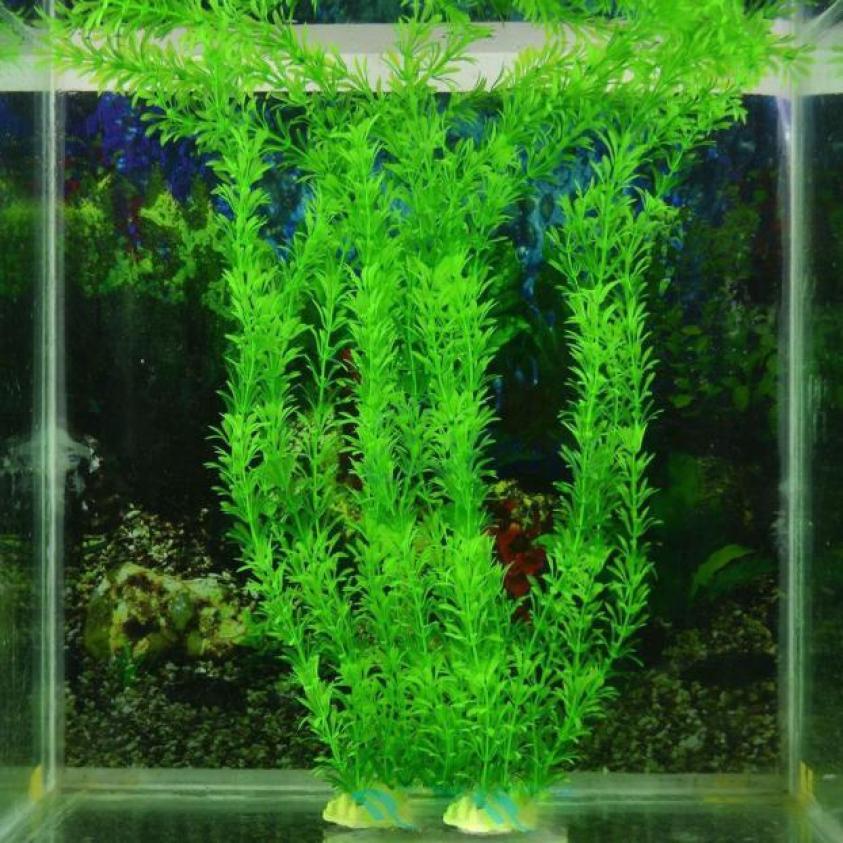 аквариумных растений