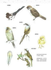 Image 5 - Chinese painting showing fine details Drawing Book / Imitation Material of Flowers, Birds, Fishes and Insects Bai Miao Textbook