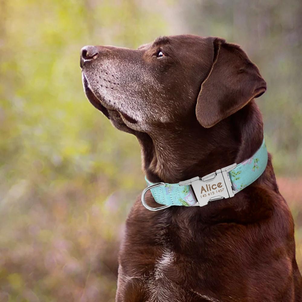 Collar de perro de Nylon personalizado con placa de identificación grabada 12