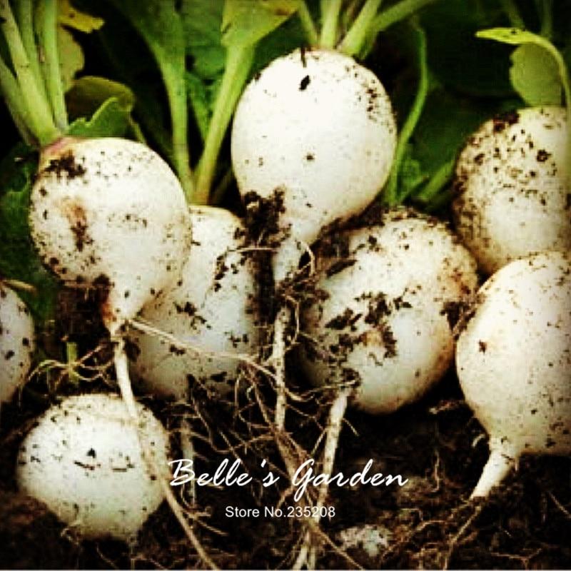 100pcs Round White Hailstone Radish Seeds Rare Imported Oganic Seeds White Spring Radish Home Garden Fruit Vegetable Seeds
