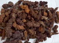 Оптовая цена! 2.2LB большой coprolite ископаемых динозавров корма образца fossi