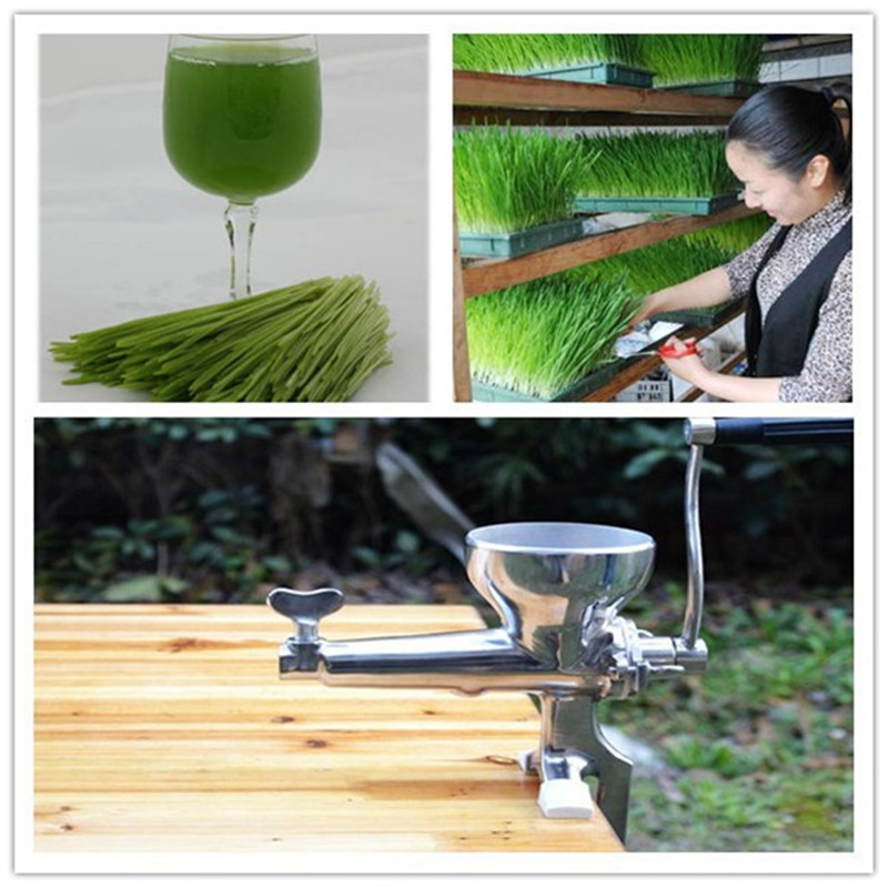 304 stainless steel wheatgrass juicer home use manual mini wheat grass fruit juice extractor  ZF 1 set stainless steel manual movable sugarcane juicer made in china popular commercial use blender machine for sugarcane