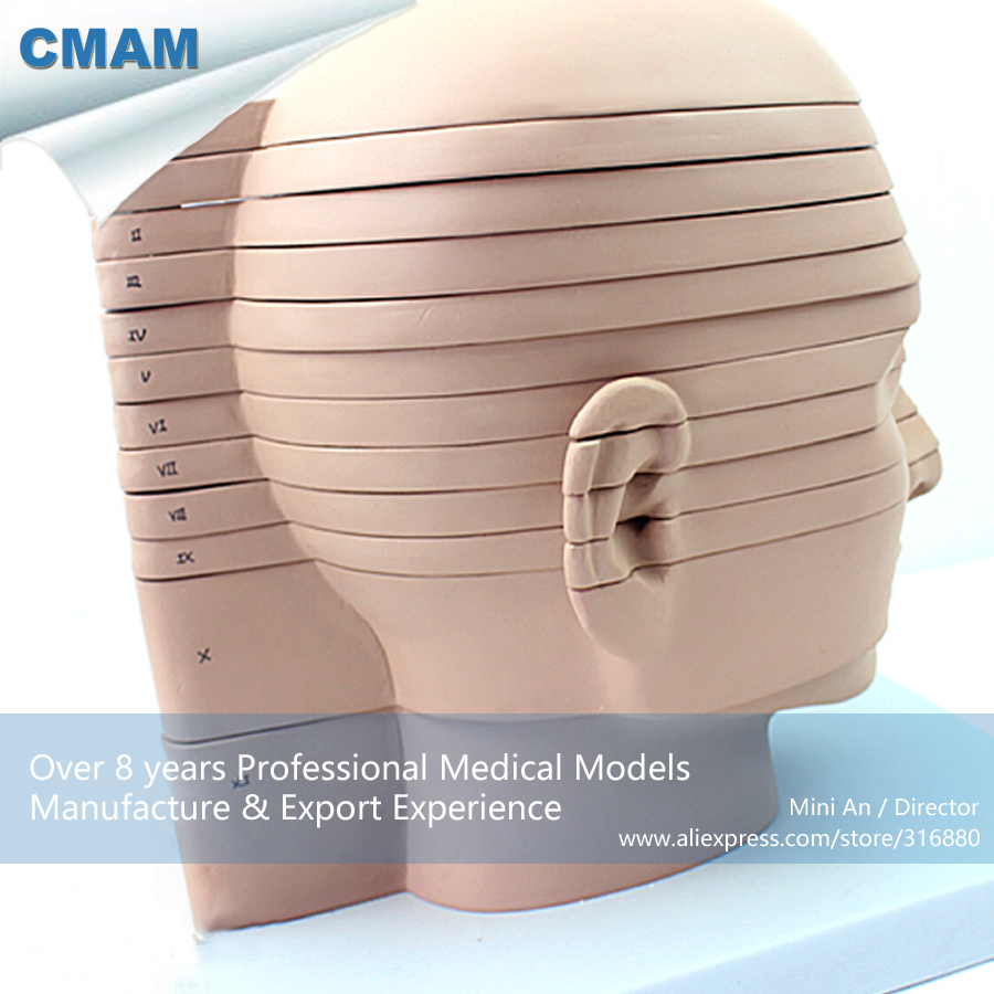 12398 CMAM-BRAIN01 Horizontal Cutting Anatomy Model of Head and CTMRI Brain, Medical Science Teaching Anatomical Models textured padded bikini