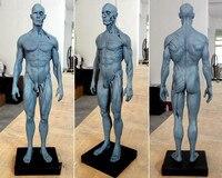 Dental Lab Dentist 30cm Height Human Anatomical Anatomy Skull Sculpture Head Body Model Muscle Bone Artist