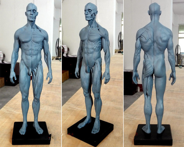 Dentista Dental del laboratorio de 30 cm altura de la acupuntura Humana Anatómico Anatomía Cráneo sangre Escultura Cabeza cuerpo modelo Óseo Muscular Artista
