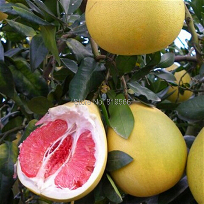 rare chinese fruit tree seeds outdoor fruits plants sementes, Beautiful flower