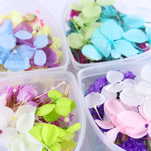 1 Box Real Dried Flowers Dry Floral Manicure Stickers DIY Preserved Flower Leaf With Box Glass Bottle 3D Nail Art Decorations
