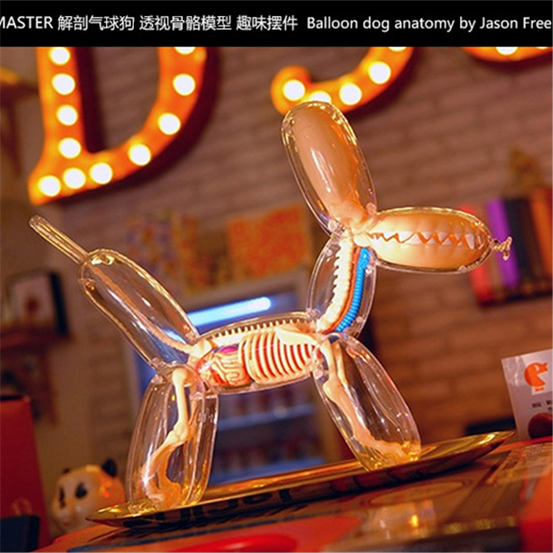 4D Big Balloon Dog Intelligence Assembling Toy Assembling Toy Perspective Anatomy Model  DIY Popular Science Appliances