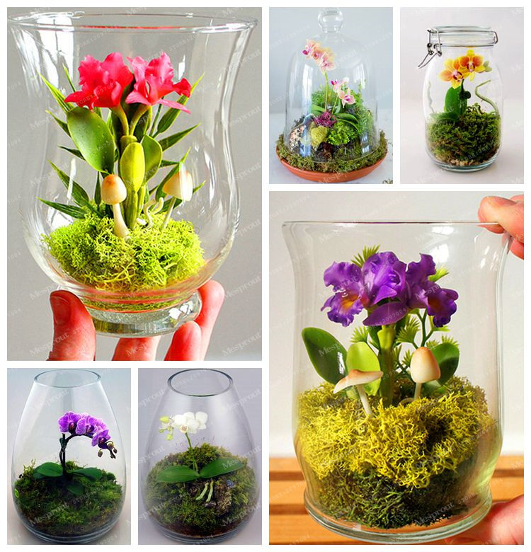 Aliexpress.com : Buy 100Pcs Mini Bonsai Orchid Seed Office Plant Beautiful  Flowers Home Miniature Flower Pot Garden Plants Four Seasons Free Shipping  From ...