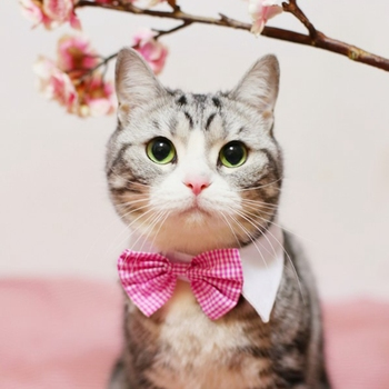 The Gentlemen Cat Bow Tie