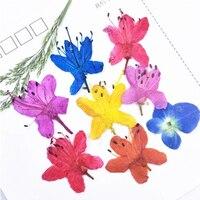 Auspicious Rose DIY Handmade Material Dried Flower 1 Lot 100pcs Press Flower Free Shipment