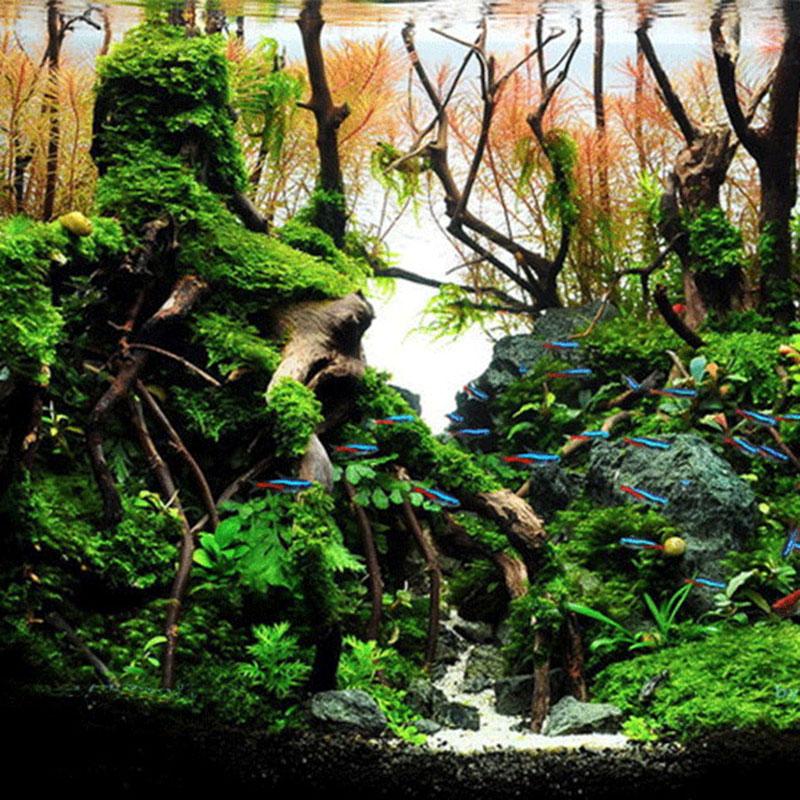 Decorations Natural Driftwood Aquarium