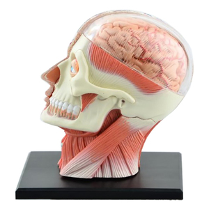 Image 3 - 4D ประกอบโครงกระดูกชุดกายวิภาคศาสตร์สมองจมูก Oral Pharynx Larynx Cavity รุ่น Anatomia ระเบิด Skull การศึกษาของเล่น