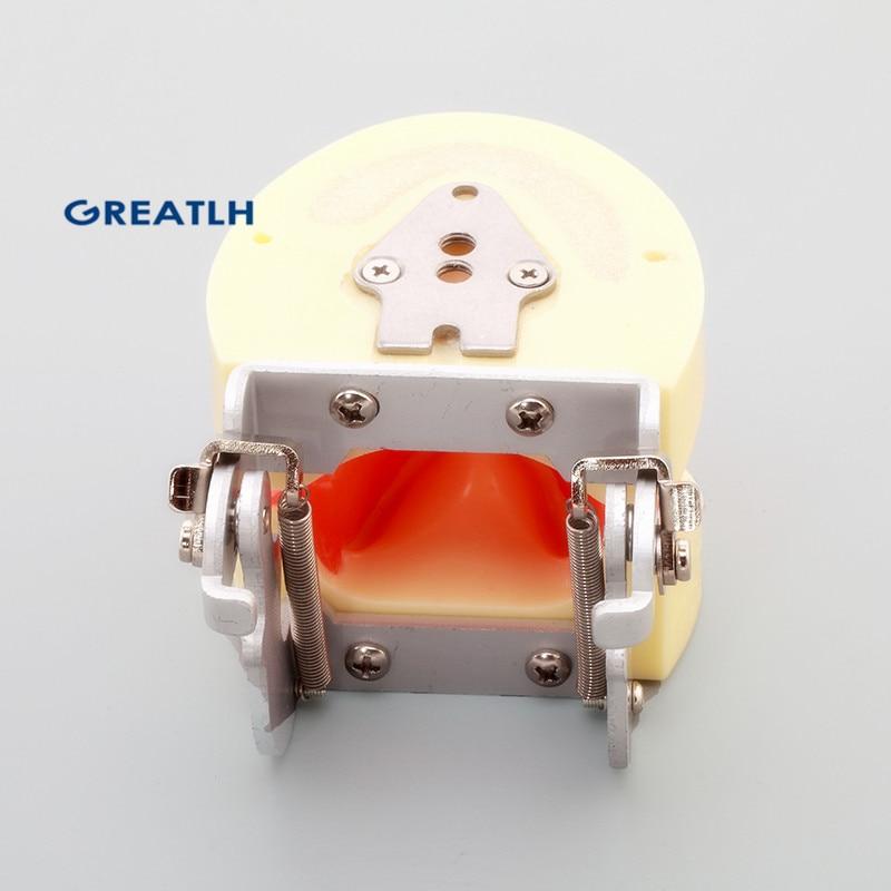 Dentl Implant Practice Model Dental Teeth Models M2002
