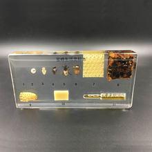 Ciclo de vida novo da abelha espécimes no instrumento educacional lucite claro 14x6.4x1.8cm