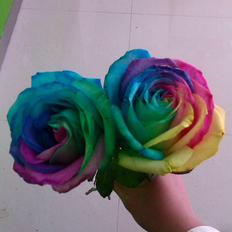 200 pcs Seeds Rare Holland Rainbow Rose Flower Home Garden Rare ...