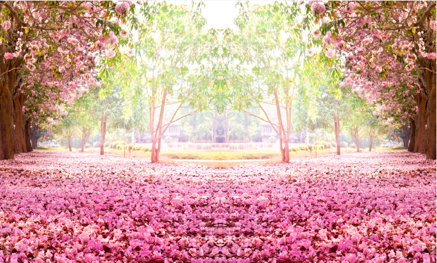 7x5ft pink flowers tree path green garden petals floor daylight park 7x5ft pink flowers tree path green garden petals floor daylight park custom photo background studio backdrop vinyl 220cm x 150cm in background from consumer mightylinksfo