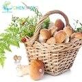 100 unids/bolsa Setas Semillas Plantas Succlent Divertido Increíble Salud Comestible Vegetal Para Granja Feliz Envío Gratis