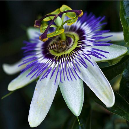 popular exotic tropical flowersbuy cheap exotic tropical flowers, Natural flower